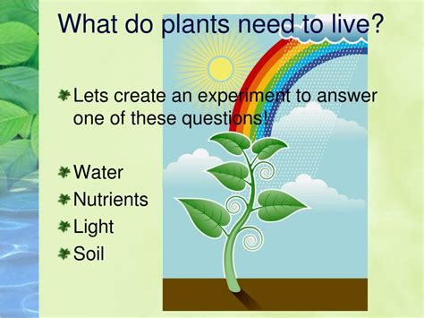 how much light do plants need to grow ppt what do plants need to live powerpoint presentation
