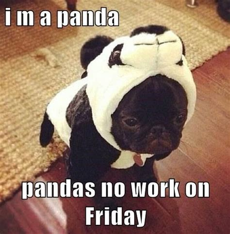 Friday Dog Meme - 71 best images about funny friday dogs on pinterest