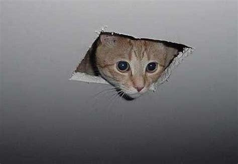 Cat In Ceiling by 15 Best Cat Memes