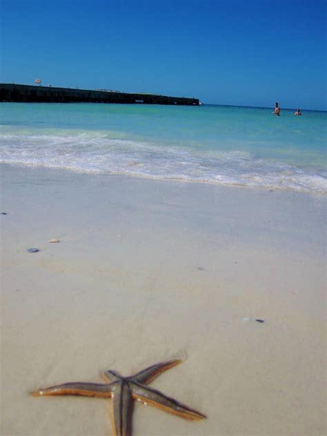 coquina beach coquina beach florida pinterest