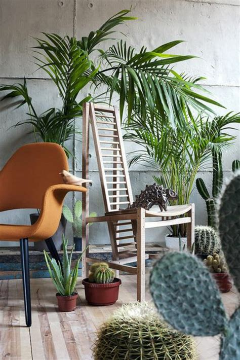 beautiful indoor plants beautiful indoor plants pictures so can you your