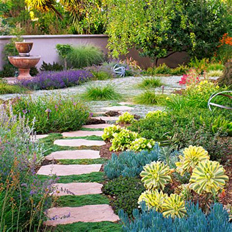 color in the garden with low water plants
