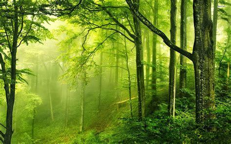imagenes de paisajes en hd para pc colecci 243 n de paisajes naturales en hd my pictures world