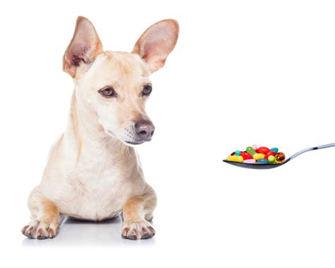 medicine safe for dogs the counter medications that are safe for dogs on a leash