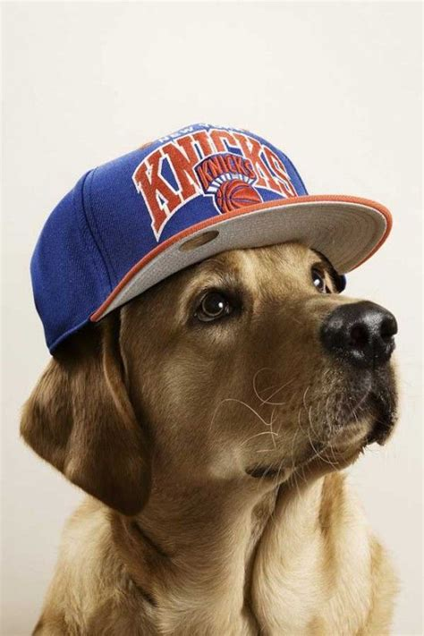 puppies with hats 11 best dogs with hats images on pets doggies and dogs