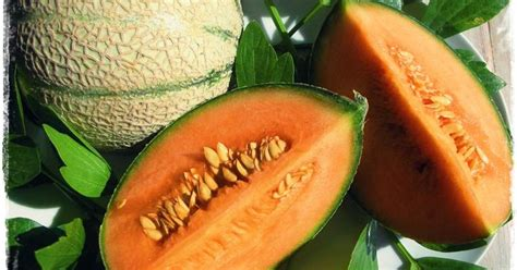 manfaat buah melon segar
