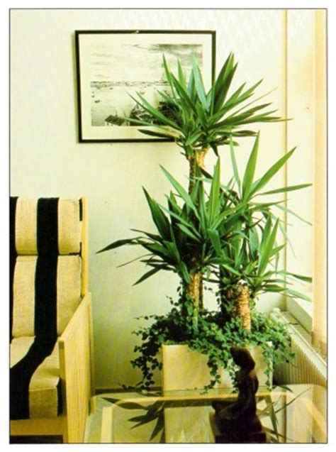 large  tall indoor plants