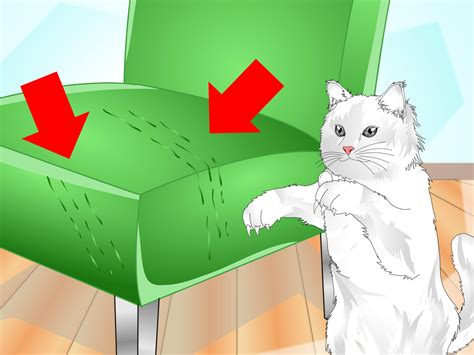 how to keep your cat from scratching your couch 3 ways to get your cat to use a scratching post wikihow