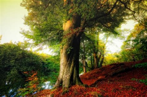 beautiful trees 80 most beautiful tree pictures from around the world