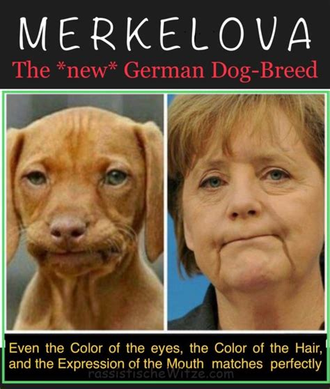 Racist Dog Meme - racist dog meme mexicans www pixshark com images galleries with a bite