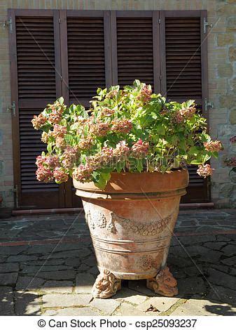 vaso terracotta grande rosa terracotta grande vaso tus hortensia foto d
