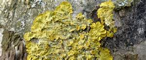 moosarten im garten flechten moose und algen liebe deinen garten