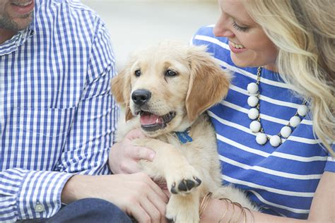 wanted golden retriever puppy puppy cooper the golden retriever daily tagdaily tag