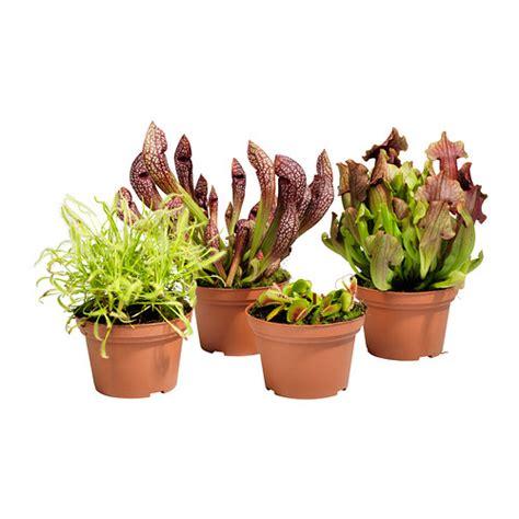 ikea outdoor plants gr 214 nskan potted plant ikea