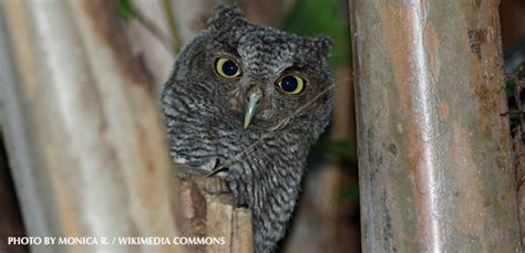 who voices the owl in americas best commercial who voices the owl in americas best commercial voice of