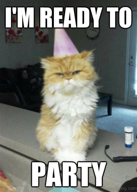 Funny Party Memes - funny party memes 10 greetyhunt