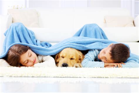 comfort pet law boy girl and dog sleeping covered with a blanket stock