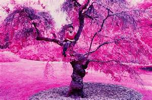 color tree file color infrared sfoseayyz tree jpg