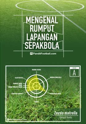 Jual Bibit Rumput Lapangan 3 jenis rumput untuk lapangan bola jual rumput taman dan