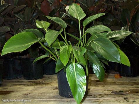 20 air purifying plants for your interior