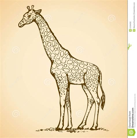 pattern giraffe drawing giraffe vector drawing stock vector image 51334232