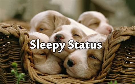 sleepy status sleep short quotes  funny messages