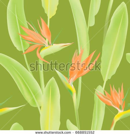pattern is also known as vector pattern strelitzia reginae blossom known stock