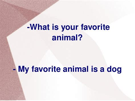 What Is Your Favorite my favorite animal