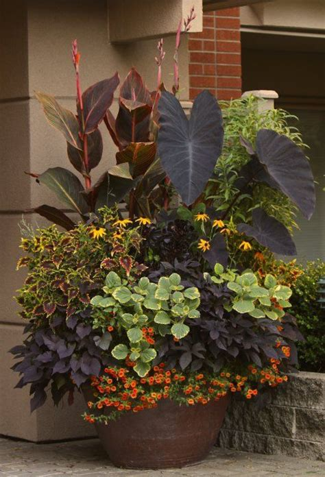 mixed flower pot elephant ears black eyed susan s begonias and more make an impact go