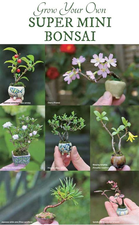 bonsai the complete guide how to make super mini bonsai empress of dirt