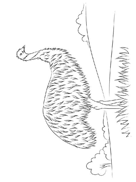 emu coloring page free emu coloring pages printable emu best free coloring pages
