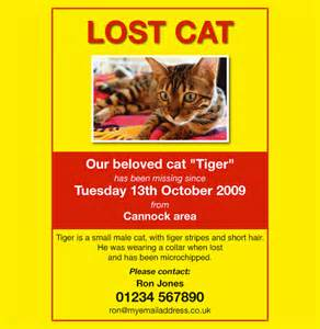 Lost Poster Template by Lost Pet Flyers 15 Free Psd Ai Vector Eps Format