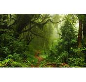 Nature Trees Forest Leaves Lianas Mist Moss Path