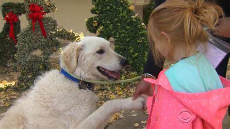sacramento adoption california pet adoptions pacini paying adoption fee for december at sacramento