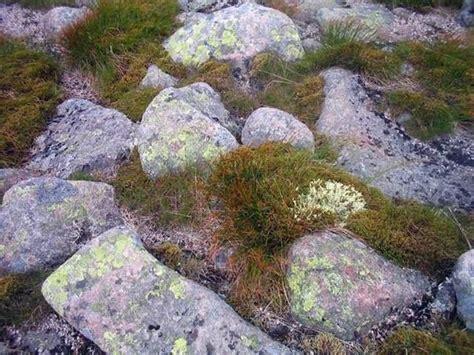 pietre per giardino pietre per giardino materiali per giardini decorate
