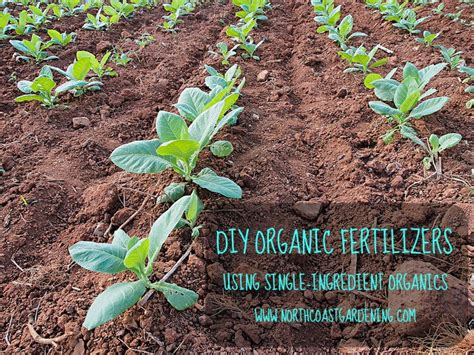 Organic In Organic Fertilizer Organic Vegetable Garden Fertilizer