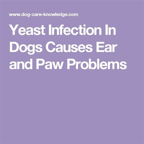 pug paw problems best 25 pug health problems ideas on care and puppy facts