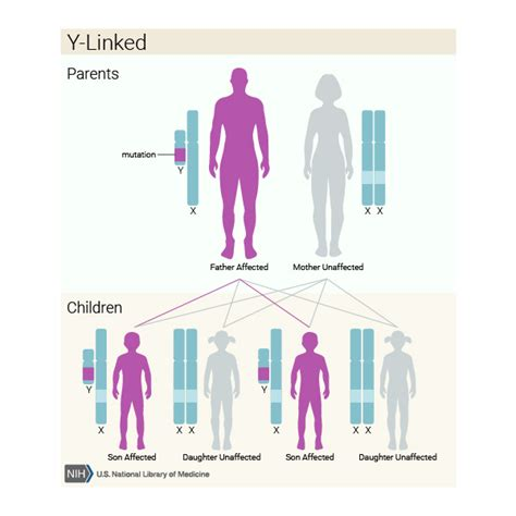 exle of y linked disorder what are the different ways in which a genetic condition