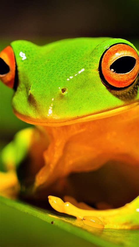 wallpaper apple frog download green tree frog wallpaper for desktop and mobiles