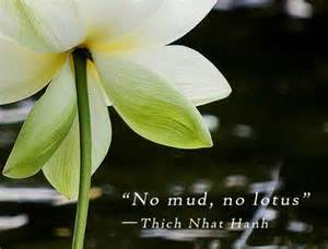 Lotus In The Mud Soulseeds 187 Archive 187 Soulseeds Affirmations