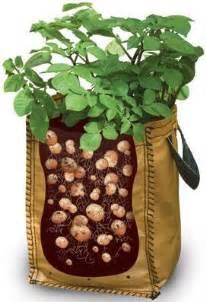 growing potatoes potato growing bags