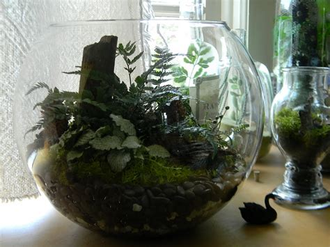 beautiful unusual terrarium containers  plant white
