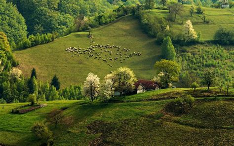 house on the hill desktop wallpaper 1920x1200 green hills sheeps trees house desktop pc and