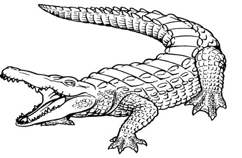pages to color awesome crocodile page to color design printable