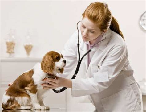 puppy health 5 health problems no owner should ignore wetellyouhowwetellyouhow
