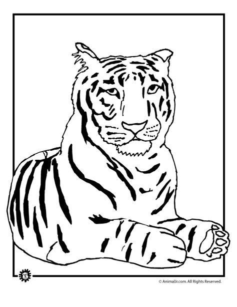 coloring page for tiger coloring pages tiger coloring home