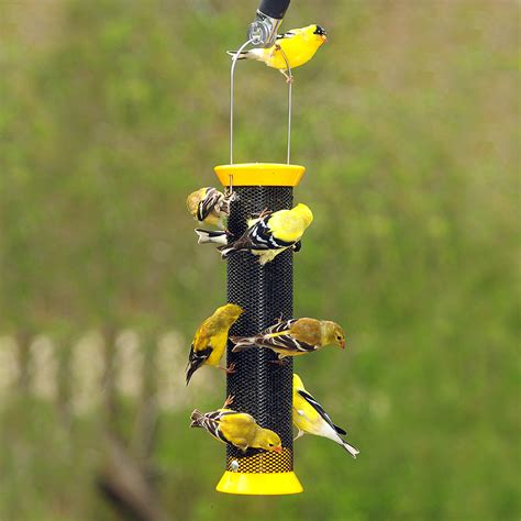 feeding finches backyard new generation finch sock bird feeding new product press