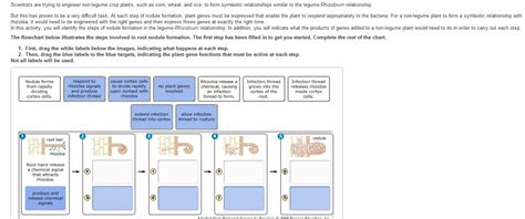 Section 13 3 Cell Transformation Answers by Biology Archive April 13 2013 Chegg