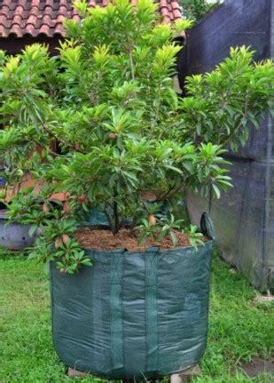 Harga Planter Bag 75 Liter promo o8ii 263i 3o4 planter bag planter bag murah