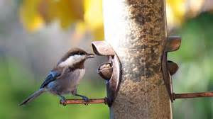 what kinds of food do birds eat reference com